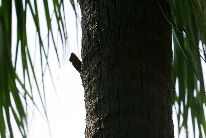 Echse Baum