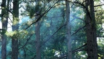 Ozark Wald