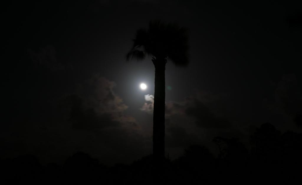 Palme Nacht
