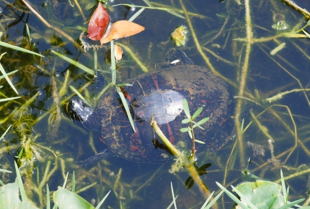 Ninja-Turtle!