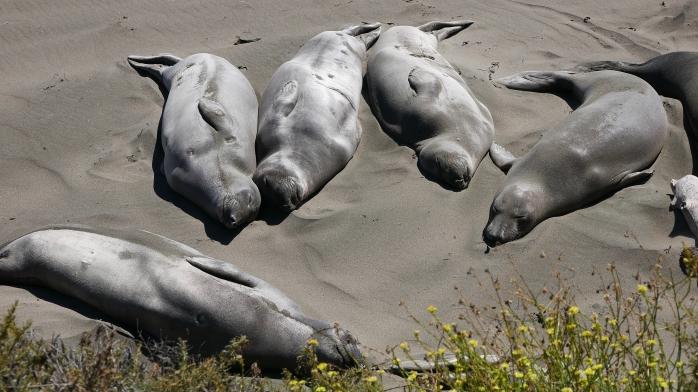 Seeelefantengruppe