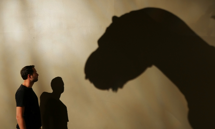 Dino Shadow