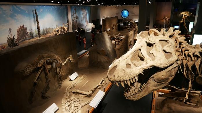 Dino Skelette