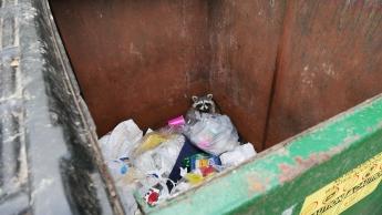 Garbage Racoon